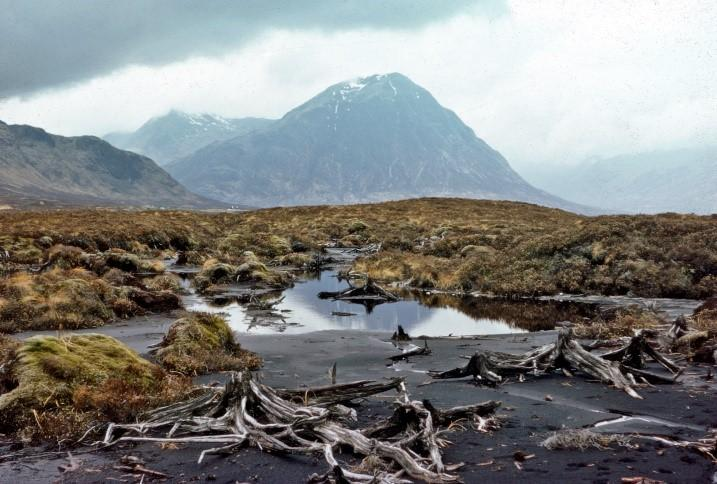 A peaty landscape showing the exposed remains of fossil pine stumps