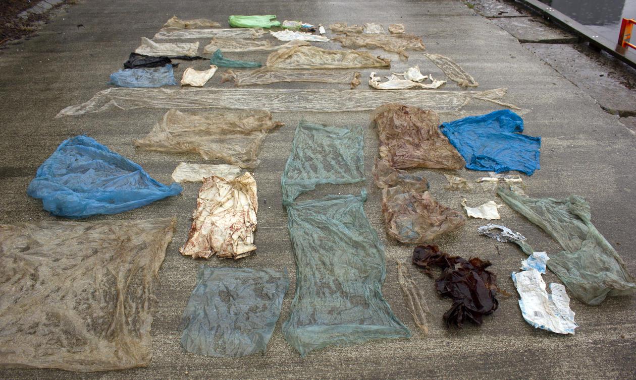 plast hvalmage