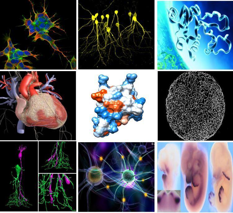 research pictures biomedicine
