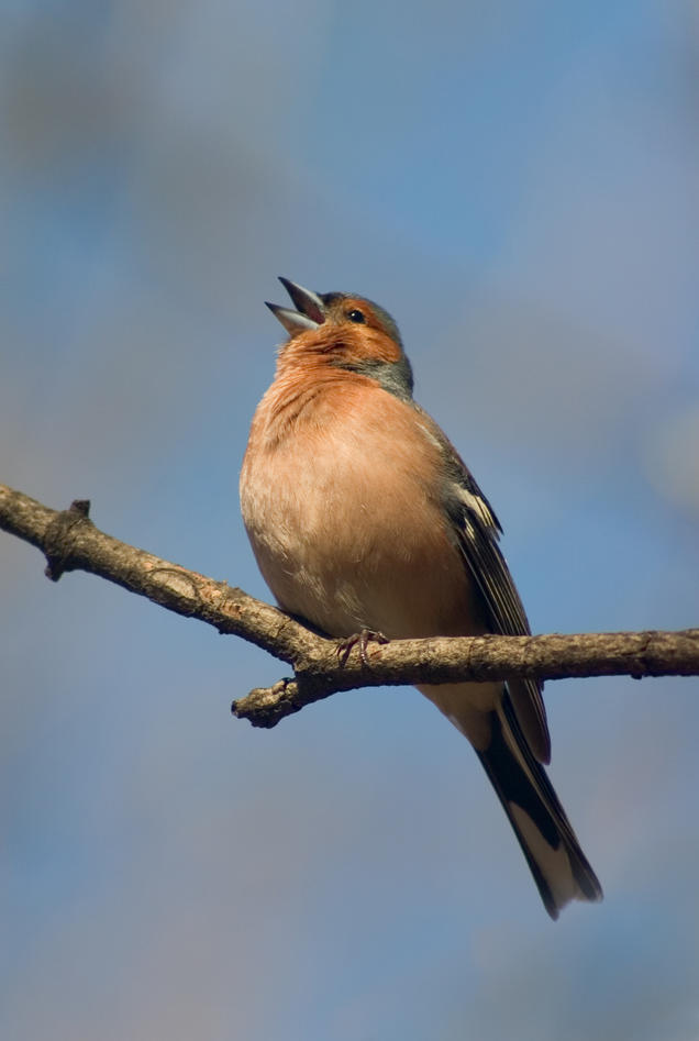Bilde av en fugl på en grein