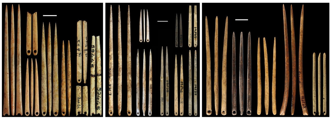 The origin of sewing technology. Palaeolithic eyed needles from France (left and centre) and China (right)