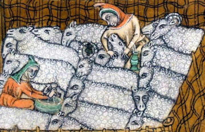 Sheep from the Luttrell Psalter