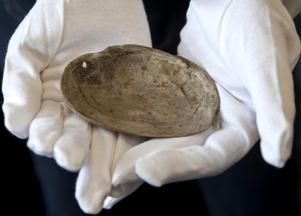 A researcher, wearing white gloves, holds a shell from Java in Indonesia. The shell shows geometrical engravings created by early hominids.
