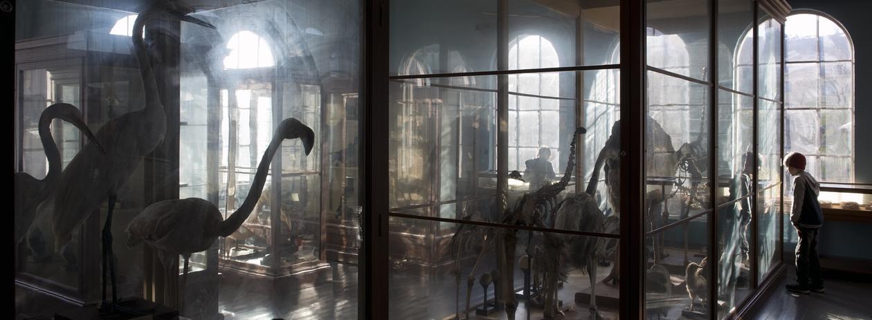 foto av de gamle utstillingsmonterne på univseritetsmuseet. lyset kommer inn av vinduene og vi ser en ensom gutt som kikker inn i et monter.