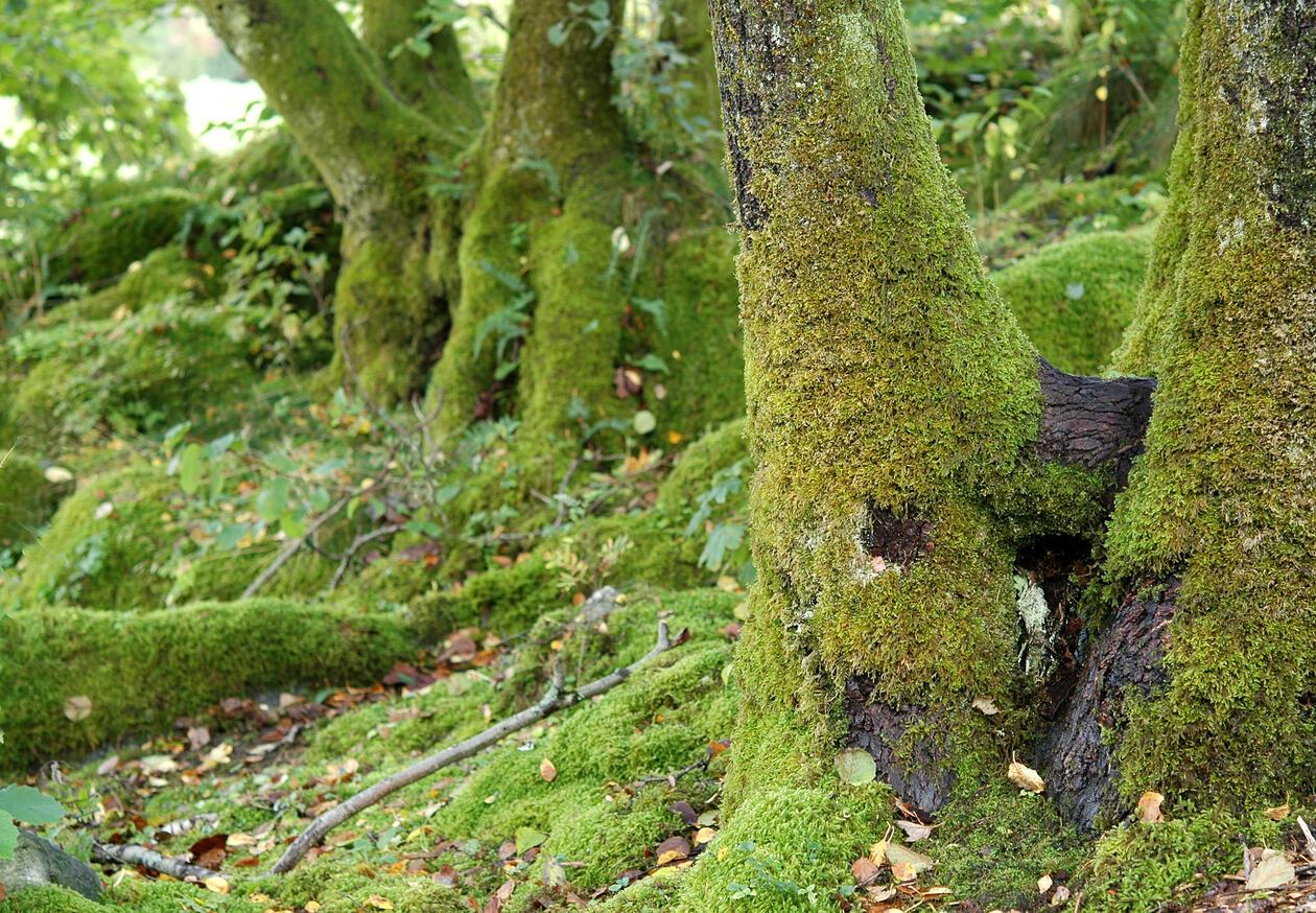 Mosevandring i Arboretet