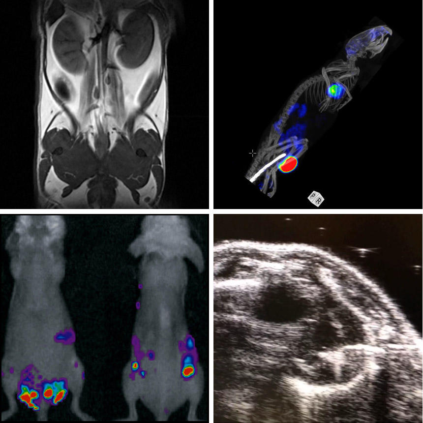 Multimodal imaging