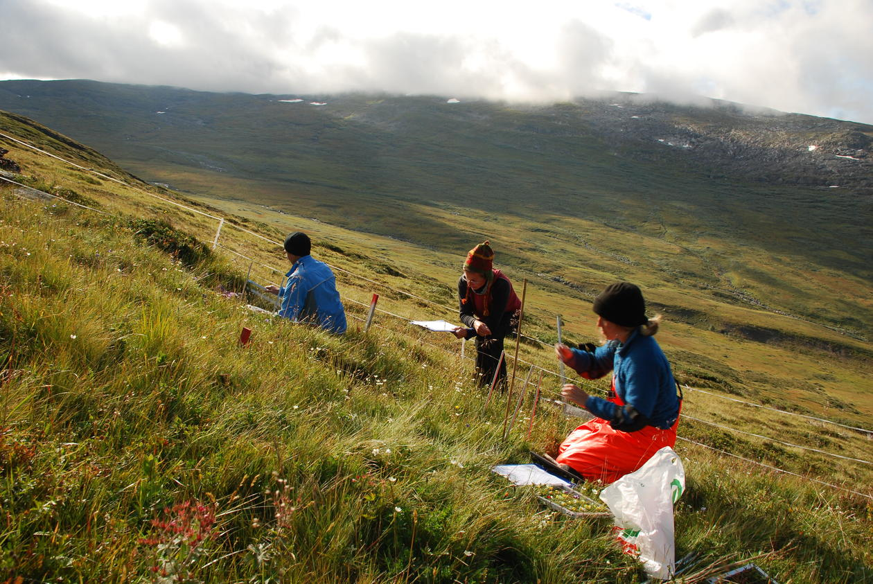 Three researchers surveing a grassland experimental plot in western Norway