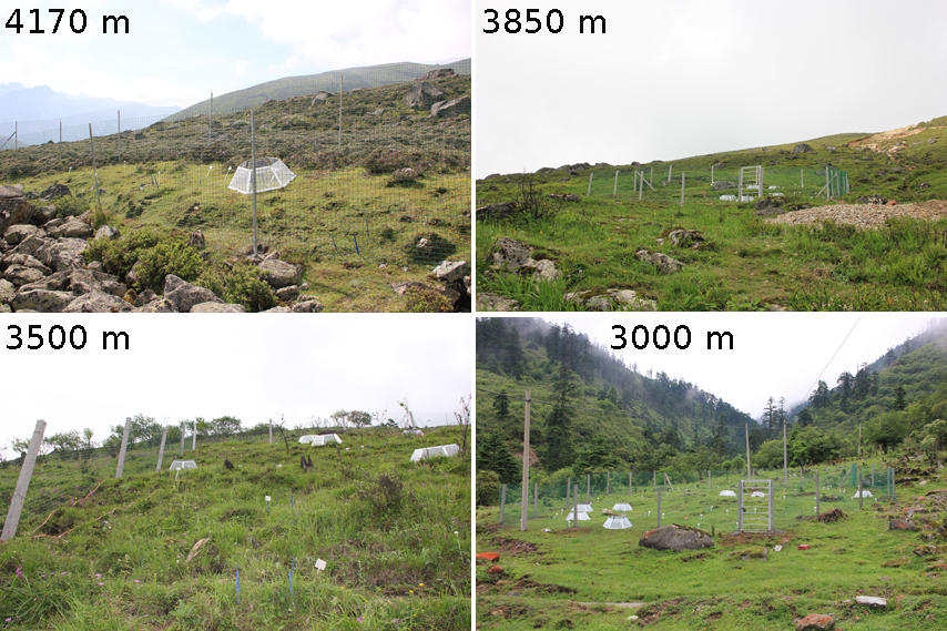 Montage of four of the TransPlant sites at four elevations