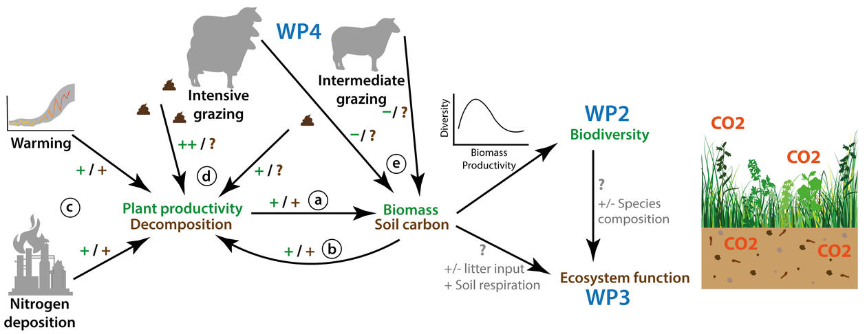 Diagram outlinging the interactive effects of grazing, climate warming, and nitrogen deposition on alpine grasslands