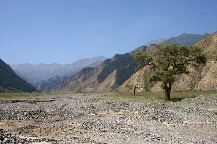 Dry stony valley floor with a single tree to the right in a Tibetan valley in the dry-steppe vegetation zone
