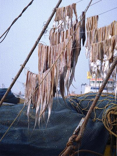 Stockfish hanging from lines