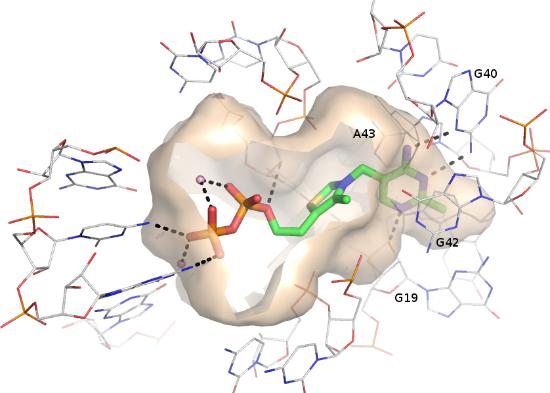 TPP riboswitch binding site