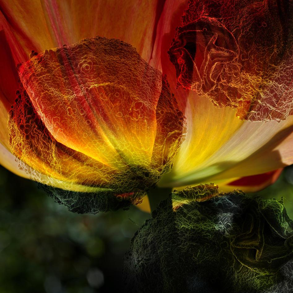 Tulipanens palett