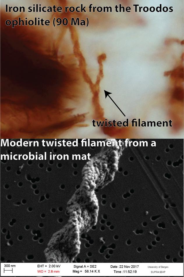 Biosignaturer funnet i en 90 Ma gammel bergart fra Troodos og en moderne mikrobiell jernmatte