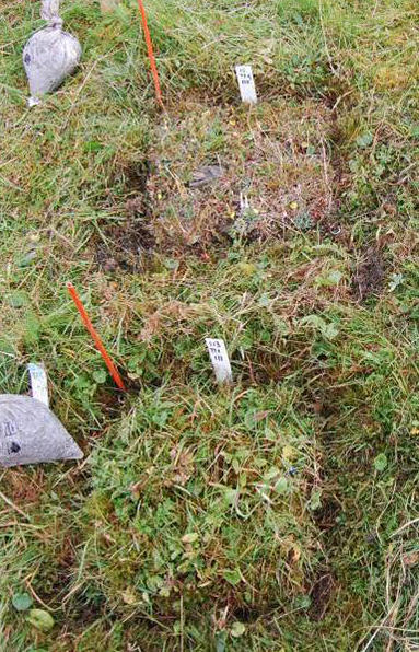 Part of an experimental vegetation plot where two turves have been transplanted