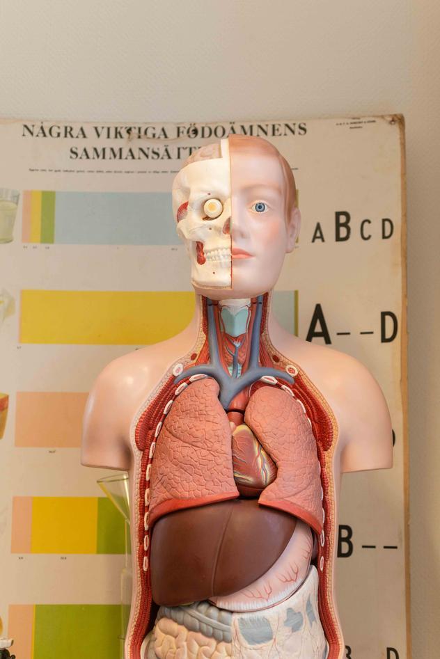 Anatomisk dokke