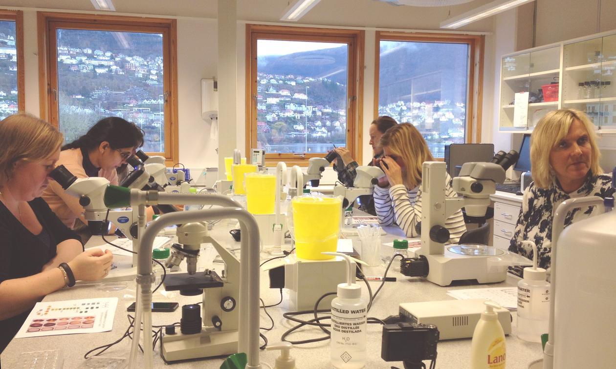 Lærarar kikkar i luper i eit laboratorium