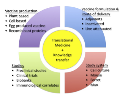 Focuses of activities in research and development of influenza vaccines.