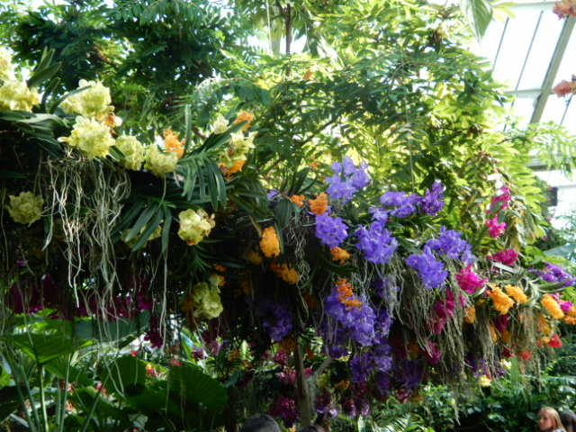 A row of orchids hanging from a high shelf at Kew Gardens