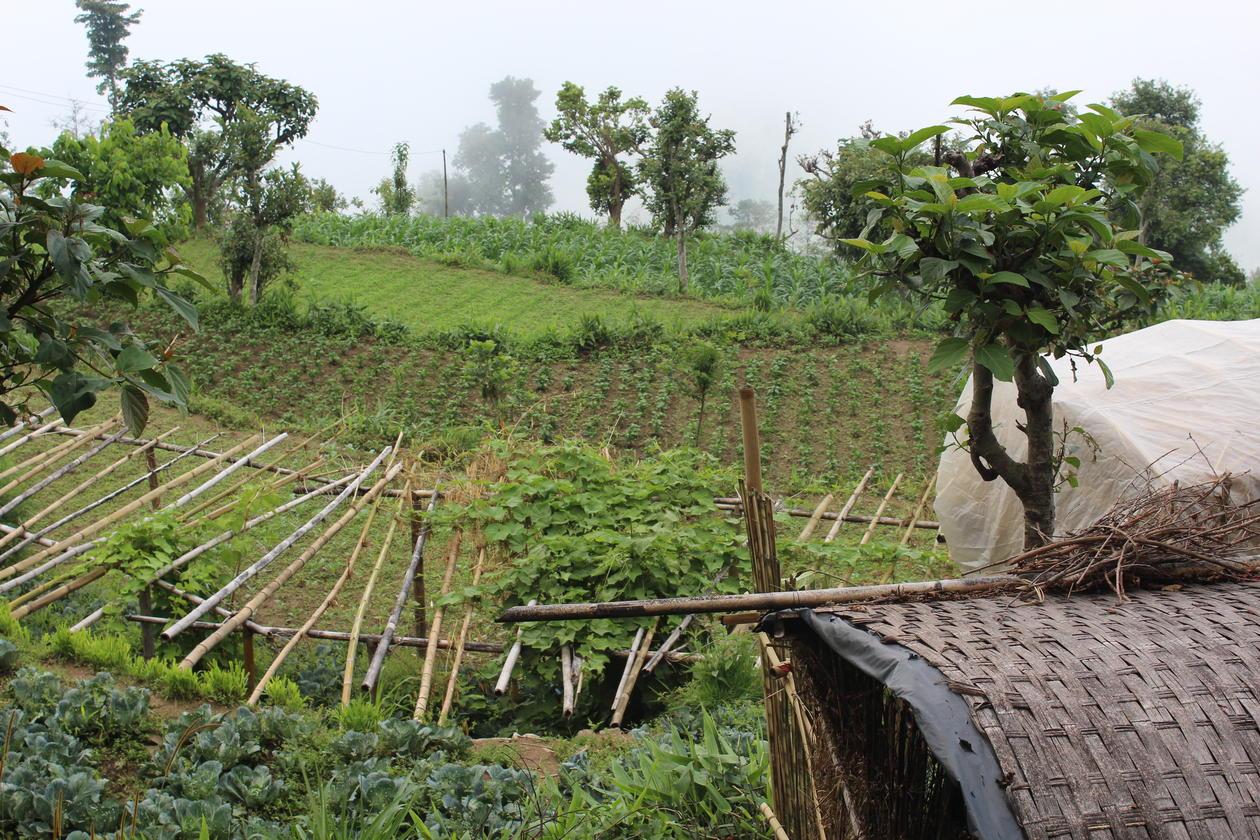 Varieties of crops.
