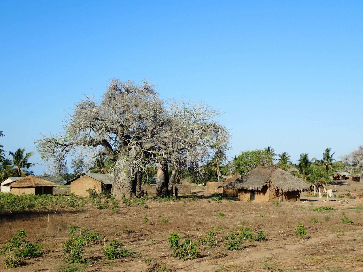 View of Nangata village with a baubau tree