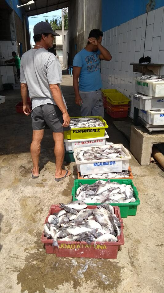 Picture of fishermen weighing the catch