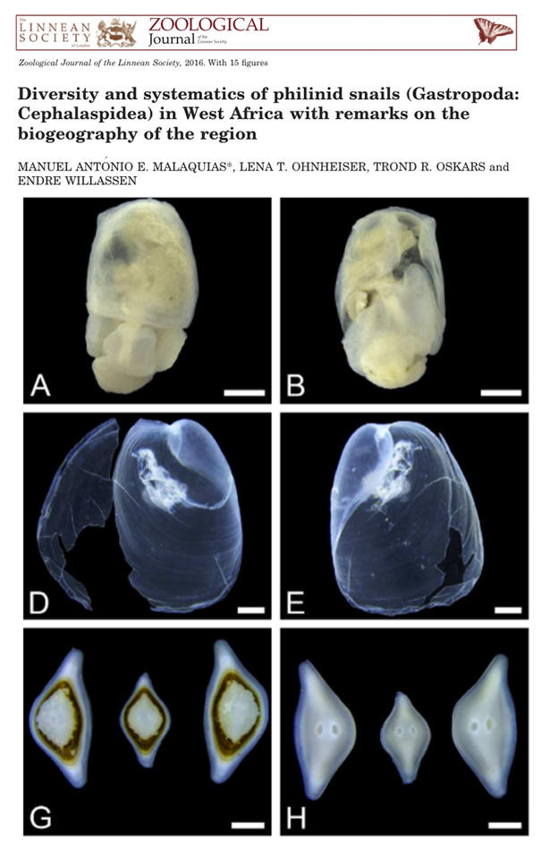 West African New Species of Gastropods