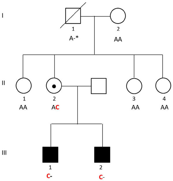 Pedigree of the family with two brothers affected by the novel intellectual disability syndrome.