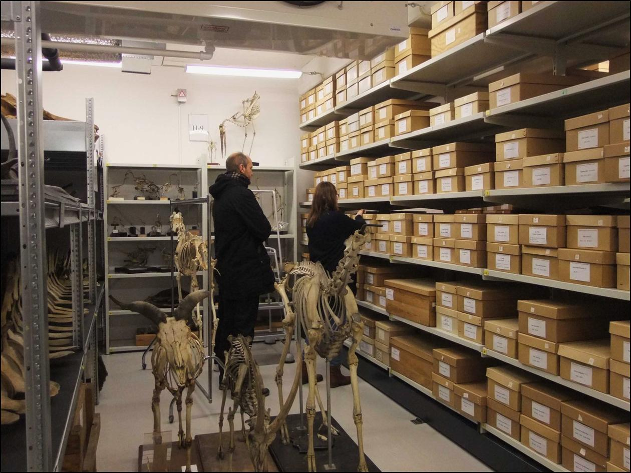 Konrad Smiarowski (left) and Hanneke Mejers (right), UM Osteology Collections Space, Natural History Department, UM.