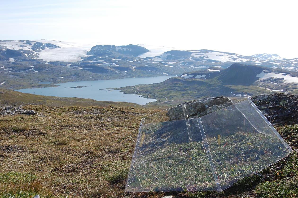 Bilde av open-top-chamber fra feltforsøk på Finse. FotoKari Klanderud