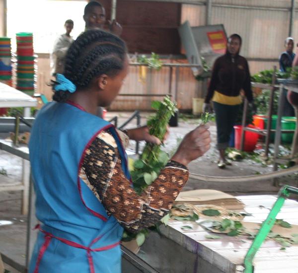 Ethiopian flower worker