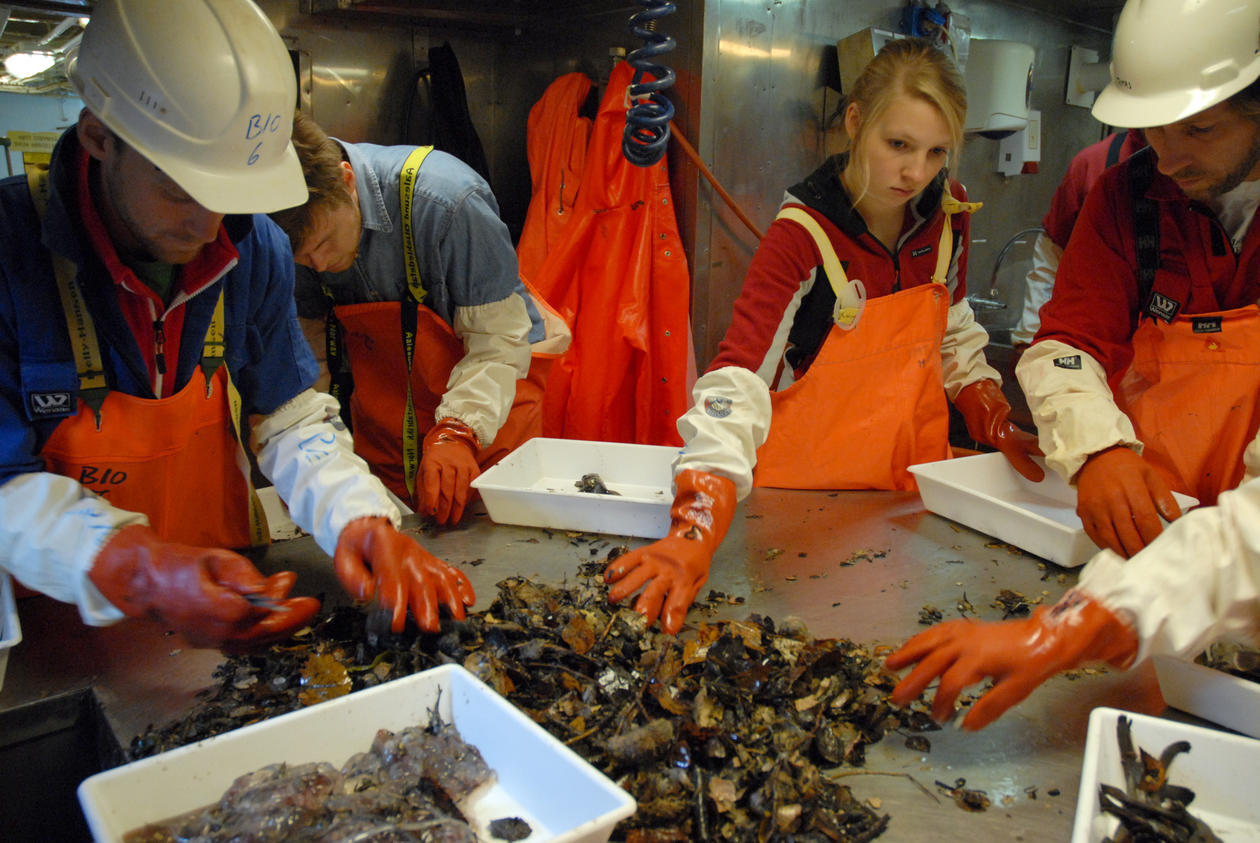 In the fish lab, sorting catch from the bottom trawl.