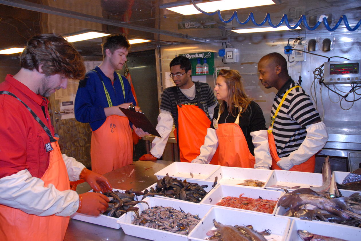 In the fish lab, bottom trawl catch sorted and ready for sampling.
