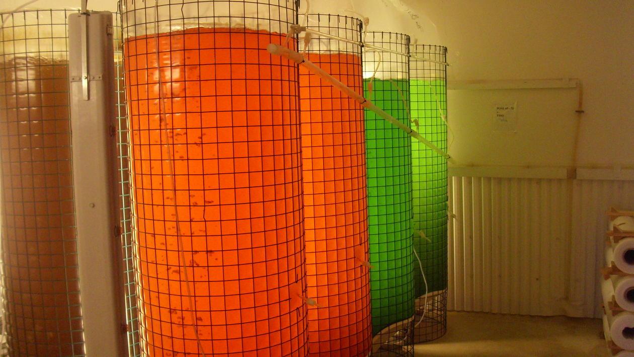 Algae culture bags