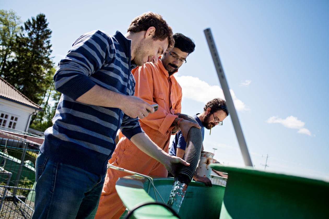 GROW, EAT, DIE: In these tanks at Espegrend outside Bergen viruses, bacteria and plankton grow, eat each other and die, within three weeks. Postdoctoral fellows Antonio Pagarete, Rakhesh Madhusoodhanan and Paolo Simonelli fill the tanks with water from th