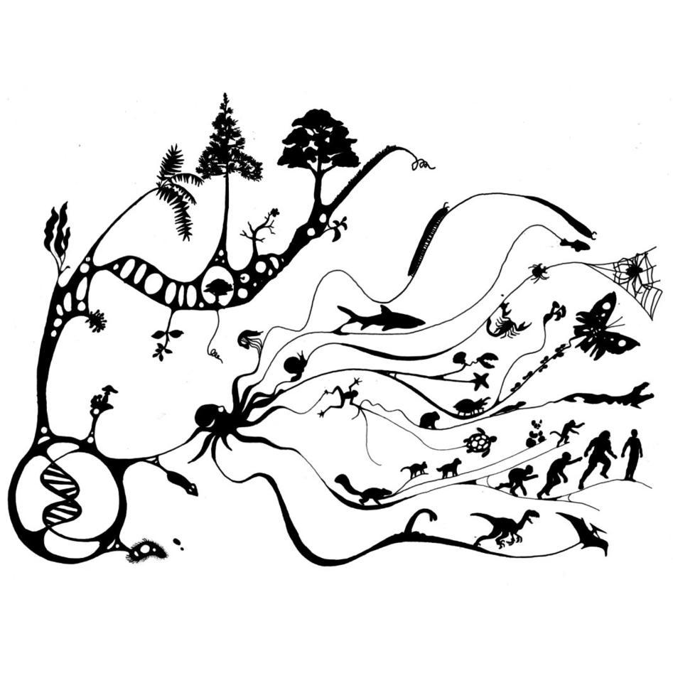 Evolusjon og medisin (Opphavsrett: www.barebente.com).