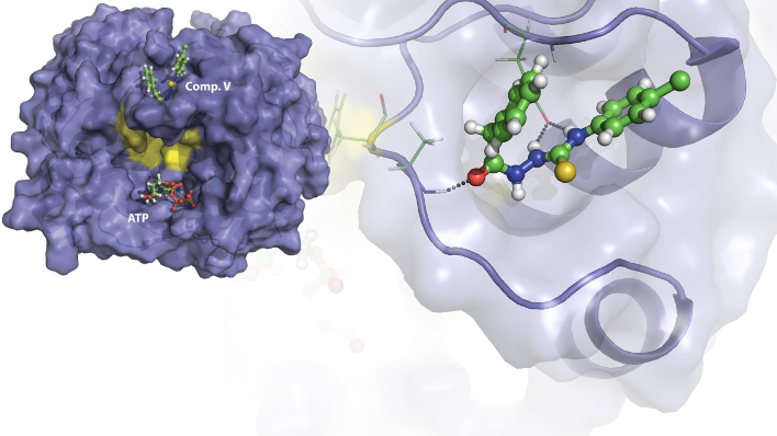 The proposed binding site of Compound V