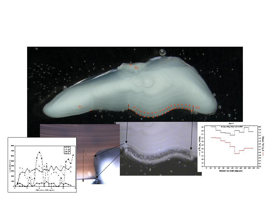 Combining analysis of different data types from single otolith section:...