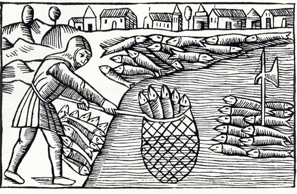Herring fishing. Olaus Magnus, Historia de Gentibus Septentrionalibus, 1555