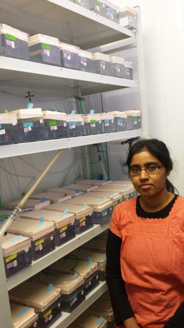 Geetha with her experimental guppies. All fish are reared in isolation, some...