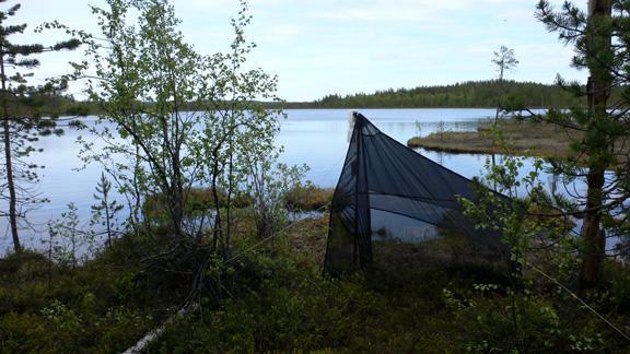 En Malaisefelle er et telt som fanger store mengder insekter. Slike ble brukt...