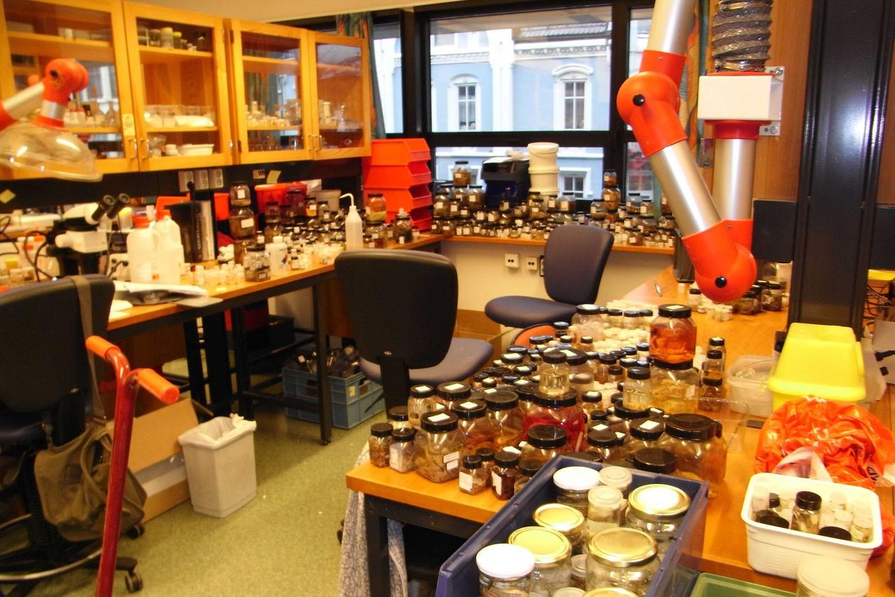 Hundrevis av nyankomne prøver organiseres på laben før de settes ned i magasinet