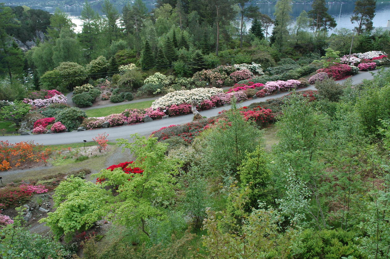 Cultivated garden varieties in Nydalen.