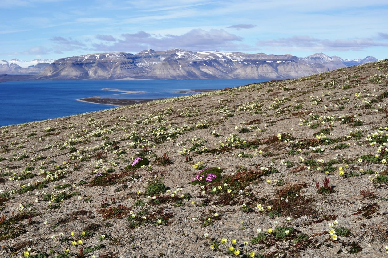 View from Kongressfjell to Kapp Wijk, Spitsbergen