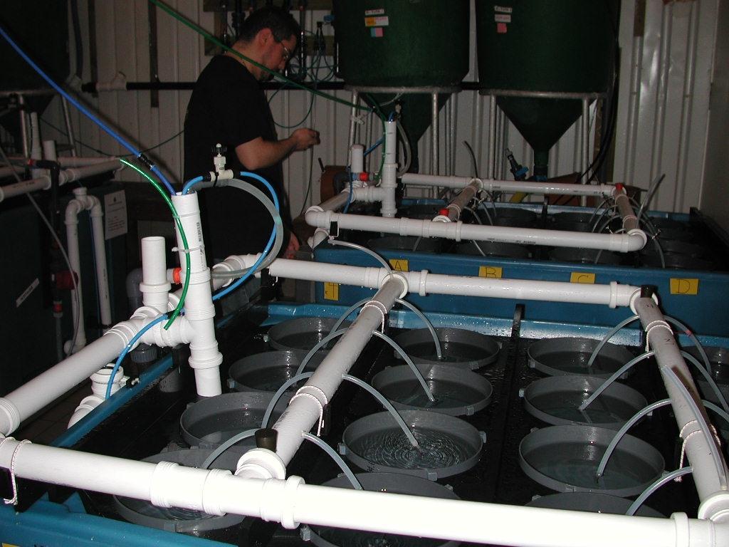 Experimental setup for determining settlement by scallops