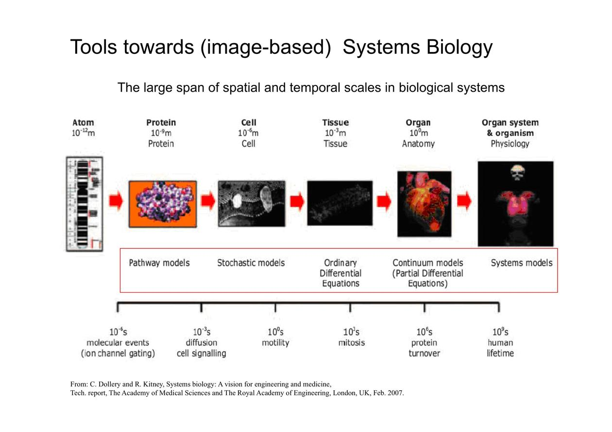 Tools towards image based systems biology