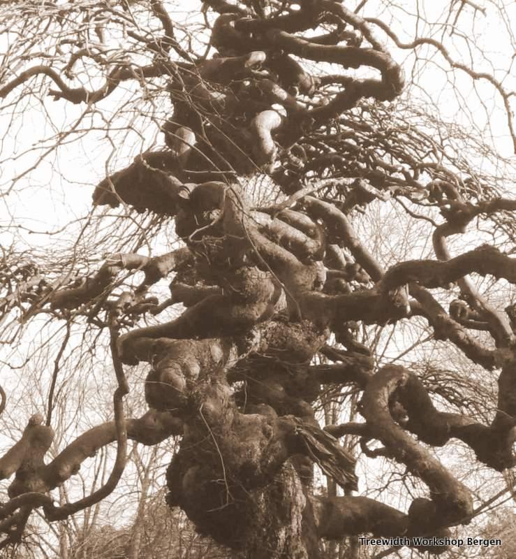 tree nygardspark