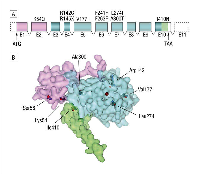 Positions of mutations in human tryptophan hydroxylase
