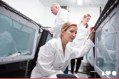 Foto fra Sea Lice Research Centre