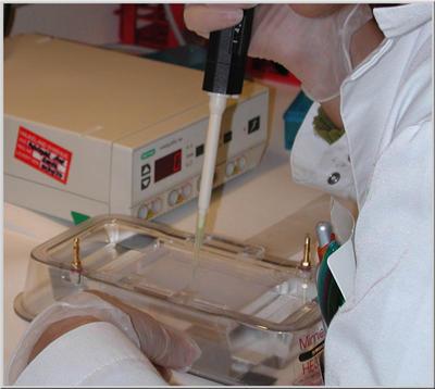 Lab.work